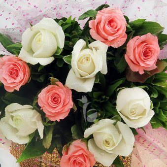 Zoom in view of 10 white and 10 pink roses bouquet - First gift of An Alluring Hamper