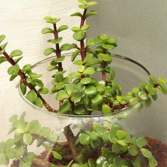jade-terrarium-9978940pl-B