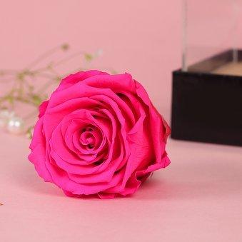 Preserved Pink Rose