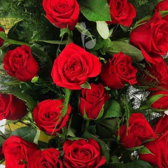 A Basket of 30 Red Roses with a Lovely Ribbon Wrapped with Zoomed View