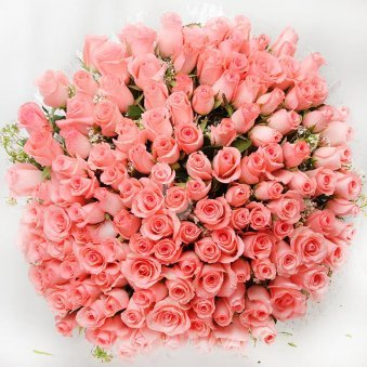 Bunch of 100 fresh pink roses with Top View