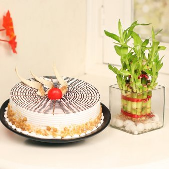 2 Layer Bamboo with Butterscotch Cake Combo