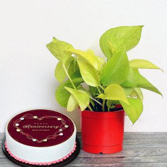 Anniversary Plant Cake Combo