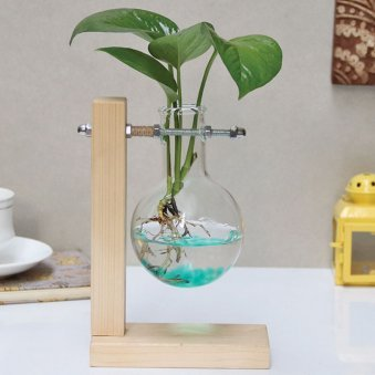 Money Plant Hanging Flask Planter  Good Luck, Hydrponic Bubble Vase