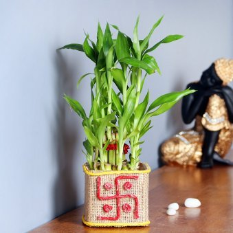 Bamboo Got Lucky - Good Luck Plant Indoors in Swastik Printed Square Jute Glass Vase