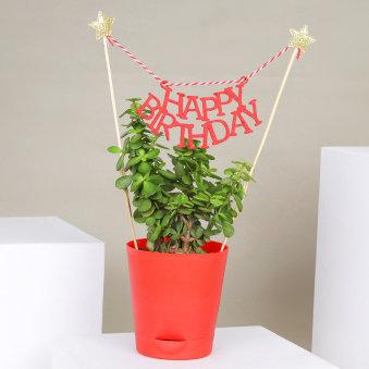 Bday Jade Plant