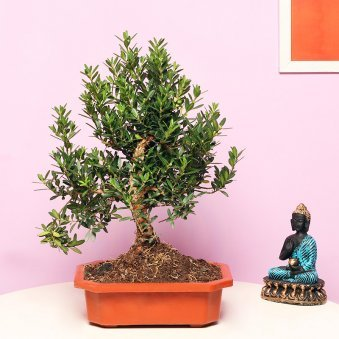 Beautiful Bonsai Plant
