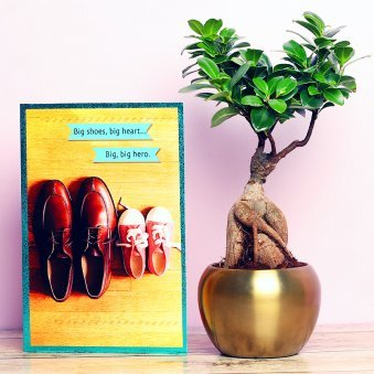 Ficus Microcarpa Bonsai Plant and Card Combo for Dad