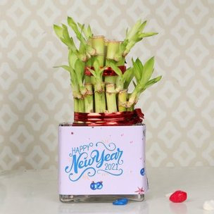 Lucky Bamboo for New Year