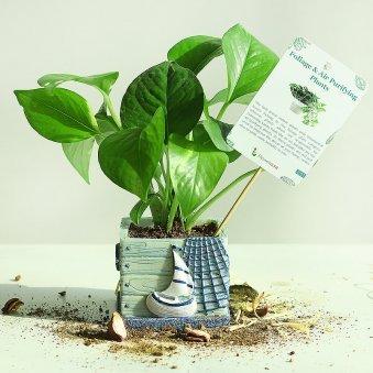 Ceramic Vase Money Plant - Good Luck Indoors in Imported Boat Vase