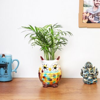Chamaedorea Palm Plant In Owl Pot