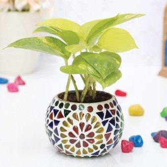 Colourful Golden Pothos Designer Glass Mosaic Vase