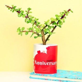 Jade Plant in Anniversary Mug