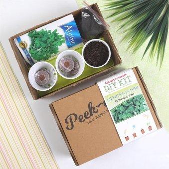 Diy Methi Seeds Kit