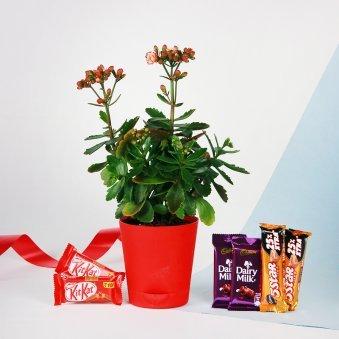 Flower Vase N Chocolate Hamper