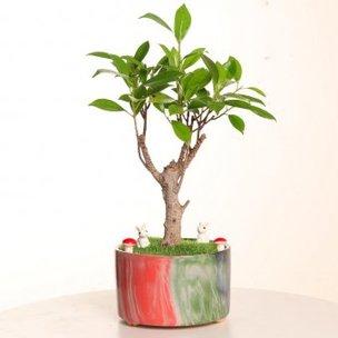 I Shape Bonsai Plant