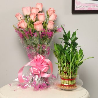 Good Luck Pink Combo - Good Luck Plant Indoors in Potpourri Vase with Bunch of 10 Pink Roses
