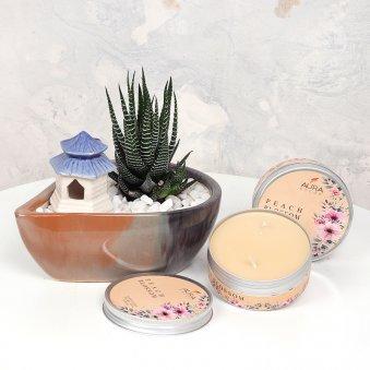 Handsome Haworthia N Candle Set