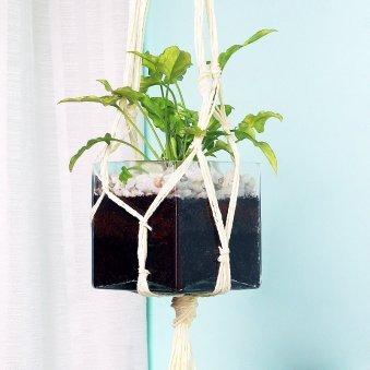 Hanging Syngonium Plant in Glass Vase