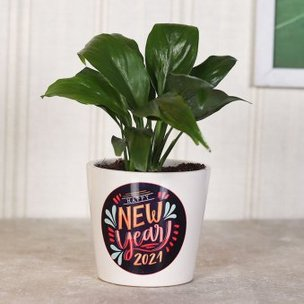 Peace lily Plant for Happy New Year Gift