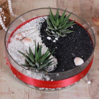 Haworthia Plant In Glass Vase