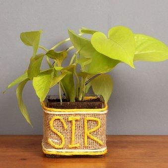 Money Plant for Boss