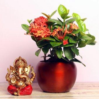 Ixora Plant and Ganesh idol Combo