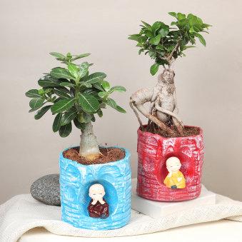 Lil Monk Ficus Adenium Combo