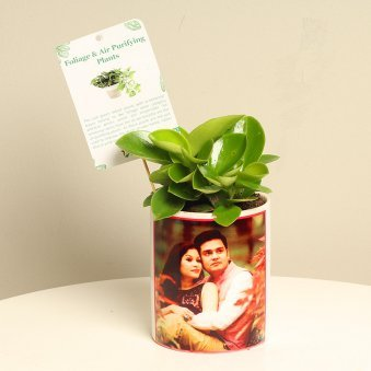 Peperomia Plant With Personalised Vase