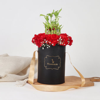 Lucky Bamboo and Carnations in a Flower Box