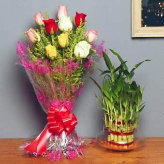 Lucky Bamboo N Roses - Good Luck Plant Indoors in Potouri Vase with Bunch of 10 Mixed Roses