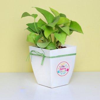 Lucky Birthday Plant - Good Luck Plant Indoors in Floweraura Chatura Vase