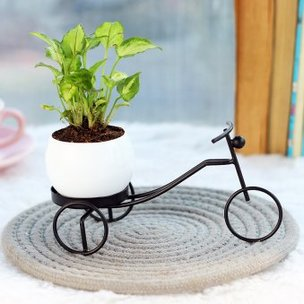 Metal Neon Foliage - Foliage Plant Location Indoors in Bicycle Vase
