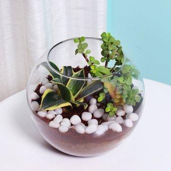 MILT and Jade Plant Terrarium