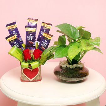 Money Plant Potted Love - Good Luck Plant Indoors in Porpourri Vase and 6 Dairy Milk Chocolates with 2 Red Roses