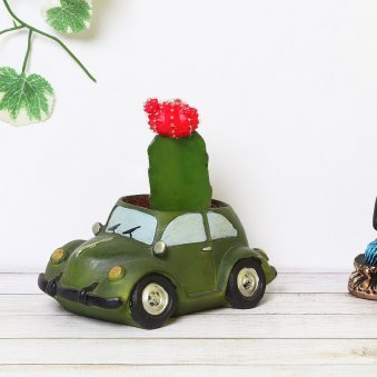 Moon Cactus Plant In Car Pot