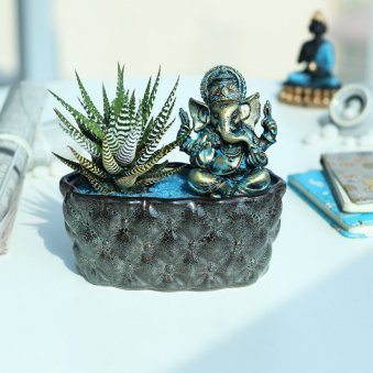 Pearl Haworthia Plant - Succulent and Cactus Plants Indoors in Bonsai Tray with Ganesh Idol