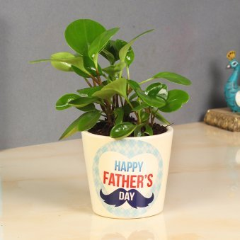 Dwarf Peperomia For Dad