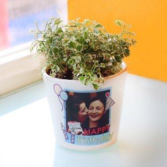 Personalized Aralia Plant