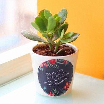 Personalized Crassula Ovata Plant