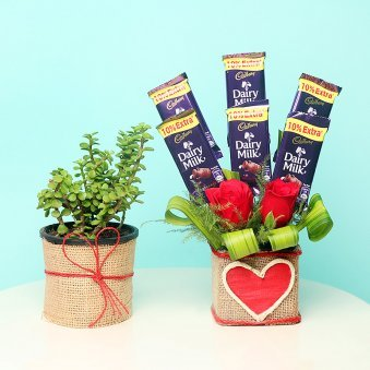 Pink Joy Sweetened Combo - Foliage Plant Indoors in Jute Wrapped Plastic Vase and 6 Dairy Milk Chocolates 13gm each with 2 Red Roses