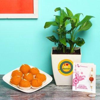 Plant With Rakhi N Sweet Combo