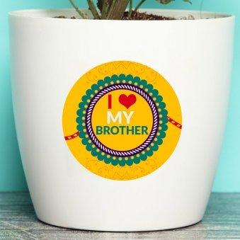 Rakhi Flower Plants Online