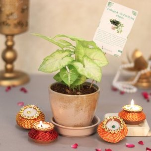 Syngonium Palnt With Diwali Diyas Set