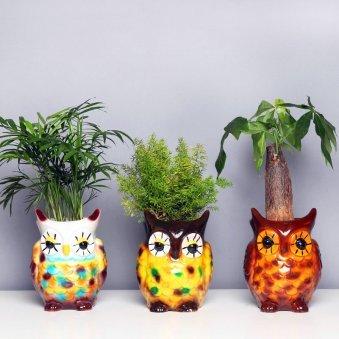 Triplet Foliage Plants