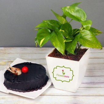 Money Plant with Chocolate Cake