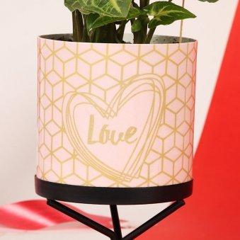 Valentines Lovely Plant Gift