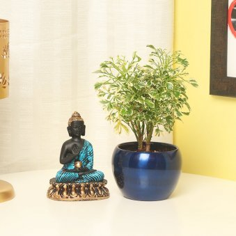 Varigated Aralia with Buddha in a Vase