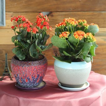Window Thrill Combo - Flowering Plant Outdoors in Dotted Lava Small Vases
