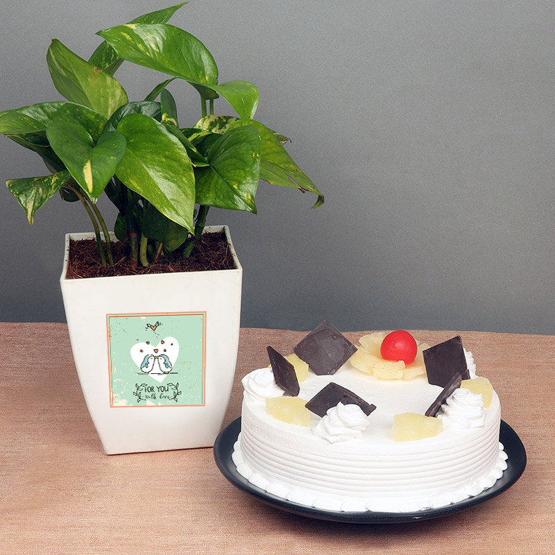 Money Plant With Half Kg Pineapple Cake For Your Valentine